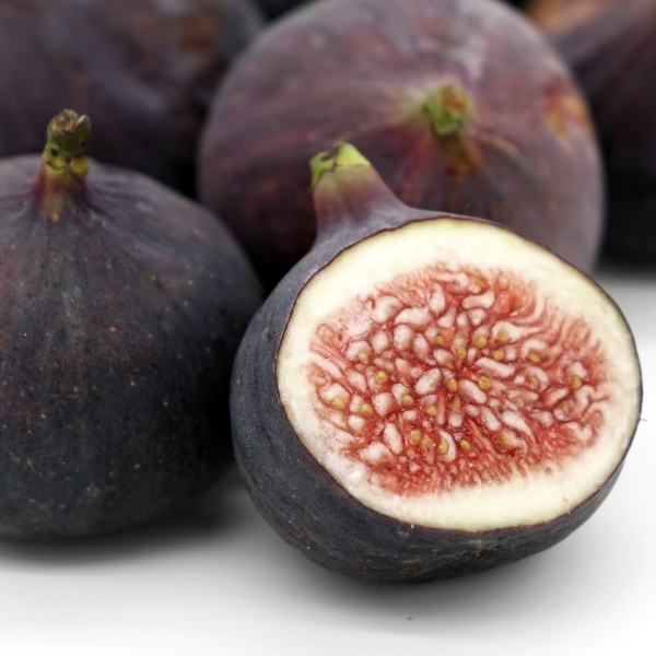 FSS Fig Seeds